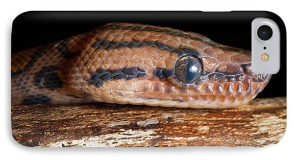 IPhone Case featuring the photograph Brazilian Rainbow Boa Epicrates Cenchria by David Kenny