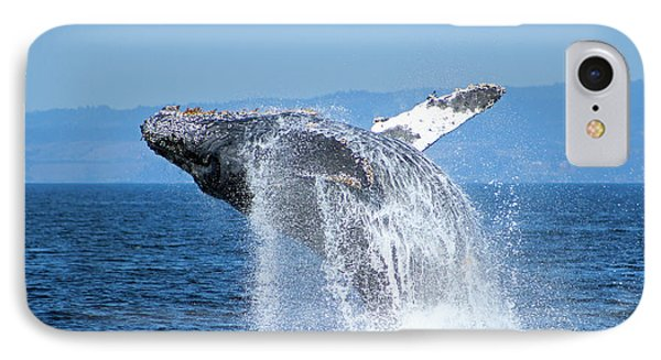 Breaching Humpback IPhone Case