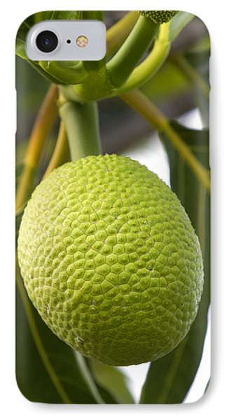 Breadfruit, Hawaii IPhone Case by David R. Frazier