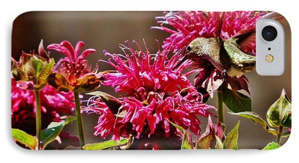 IPhone Case featuring the photograph Breakfast At The Bee Balm by VLee Watson