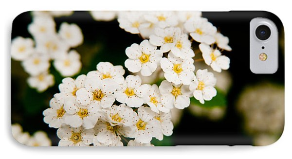 Bridal Veil Spirea IPhone Case by Brenda Jacobs