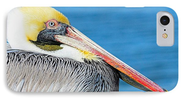 IPhone Case featuring the photograph Bright Eyed Pelican by Pamela Blizzard