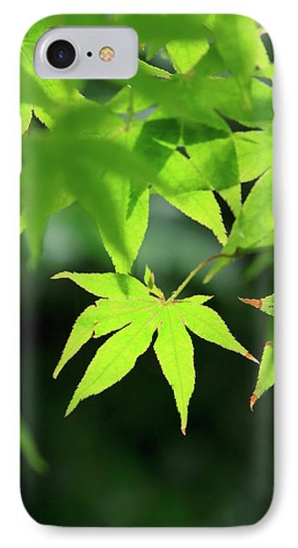 Bright Green Japanese Maple Trees IPhone Case by Paul Dymond