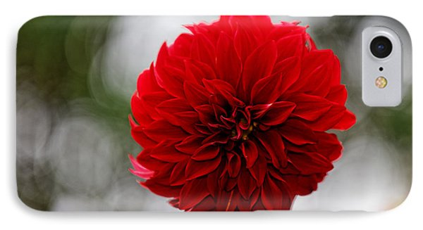 Bright Red Dahlia IPhone Case