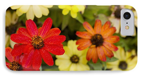 Bright Red Zinnia IPhone Case