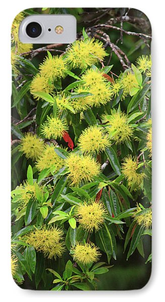 Far North Queensland iPhone 7 Case - Bright Yellow Wattle Flowers Bloom by Paul Dymond