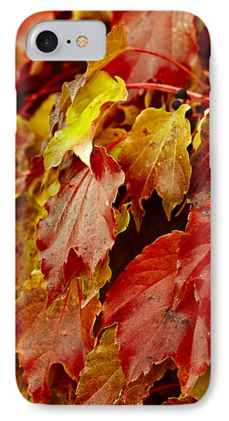 Brightest Before The Fall Phone Case by Christi Kraft