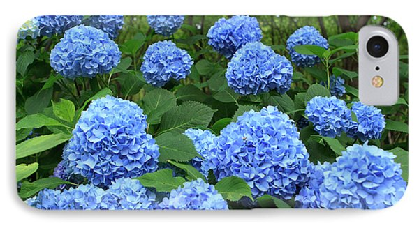 Brightly Colored Hydrangea Flowers IPhone Case by Paul Dymond