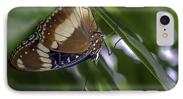 Brilliant Butterfly IPhone Case by Ray Warren
