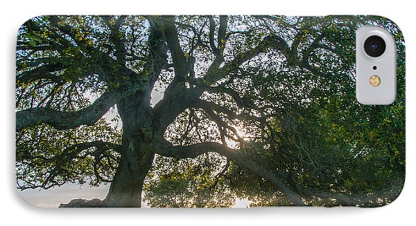 Briones Oak IPhone Case by Marc Crumpler