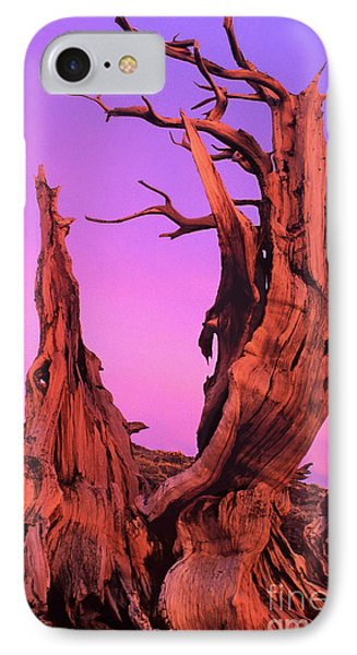 IPhone Case featuring the photograph Bristlecone Pine At Sunset White Mountains Californa by Dave Welling