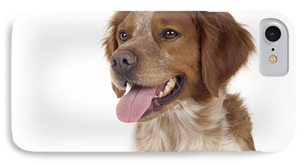 Brittany Dog, Close-up Of Head IPhone Case by John Daniels