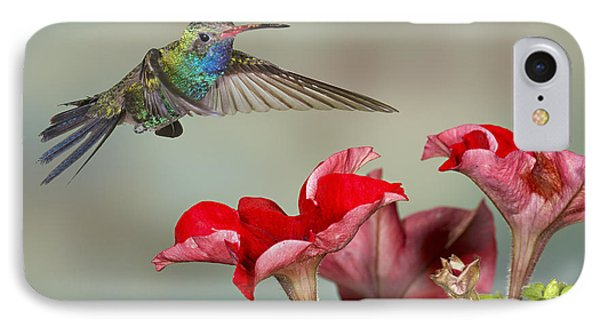 Broad Billed Hummingbird 4 IPhone Case