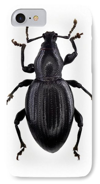 Broad-nosed Weevil IPhone Case