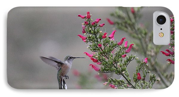 Broad Tail Hummingbird IPhone Case