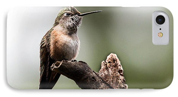Broad-tailed Hummingbird Sit  IPhone Case