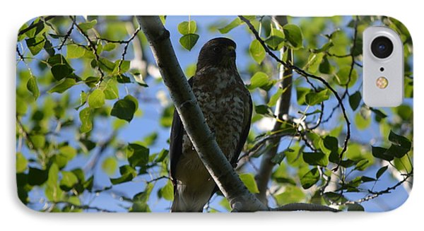 IPhone Case featuring the photograph Broad-winged Hawk by James Petersen
