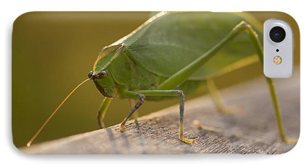 Broad-winged Katydid IPhone Case by Meg Rousher