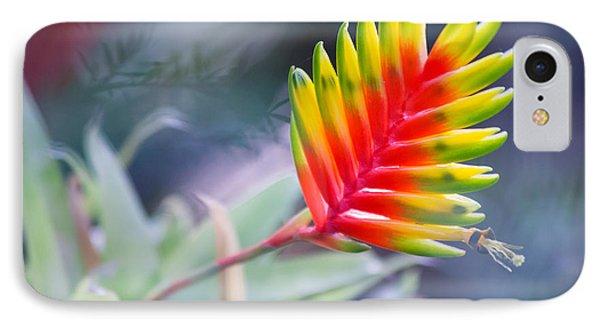 Bromeliad Beauty IPhone Case by Eti Reid