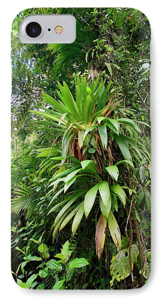 Bromeliad Growing In The Rainforest IPhone Case by Susan Degginger