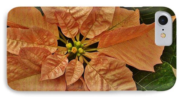 Bronze Poinsettia 3 IPhone Case by VLee Watson