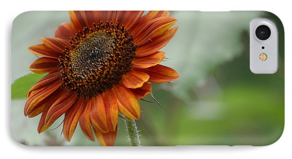 Bronze Sunflower IPhone Case by Living Color Photography Lorraine Lynch