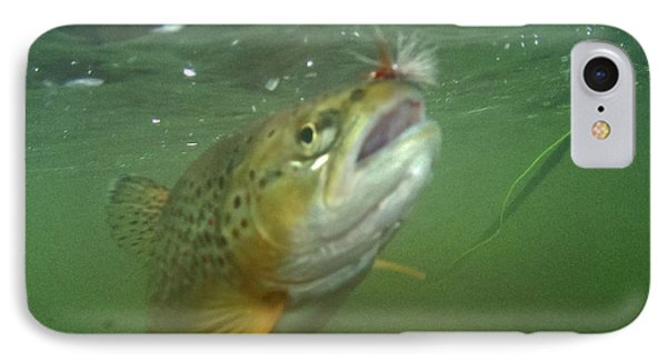 Brow Trout In Gallatin River Phone Case by Jason Standiford