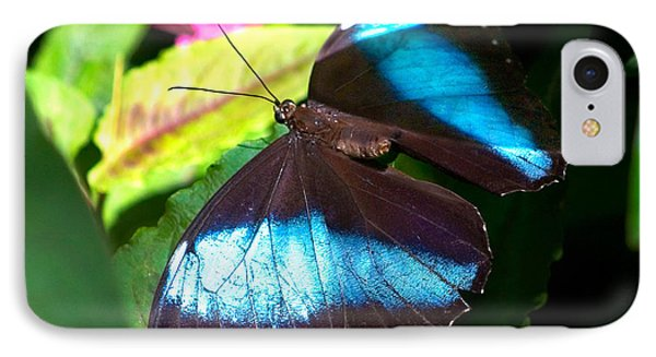 Brown And Blue With Pink IPhone Case by Karen Stephenson