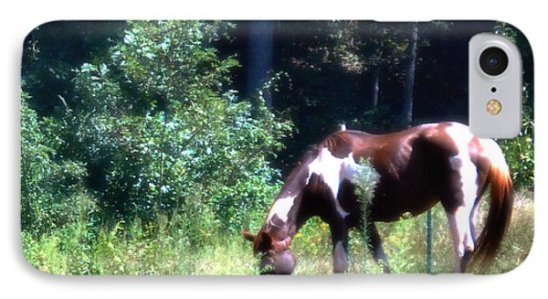 Brown And White Horse Grazing IPhone Case