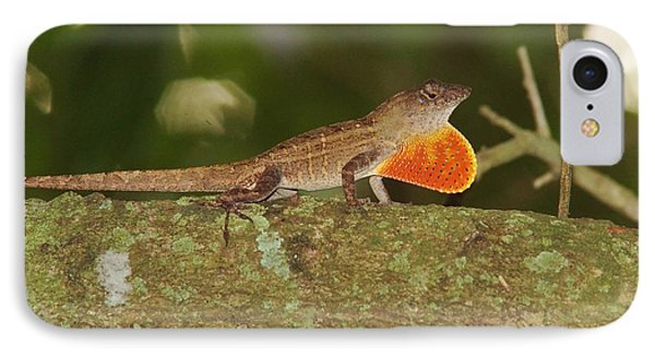 Brown Anole Splendor IPhone Case by Lynda Dawson-Youngclaus