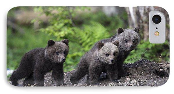 Brown Bear Cubs Croatia IPhone Case by Lesley van Loo