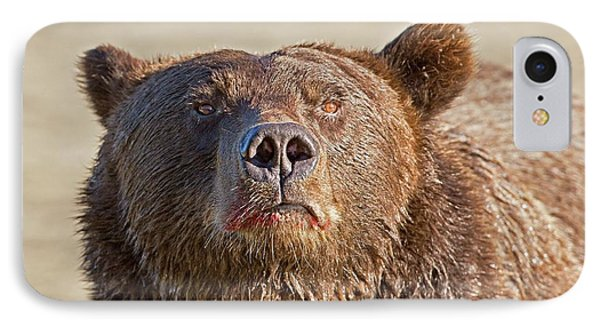 Brown Bear Sniffing Air IPhone Case by John Devries