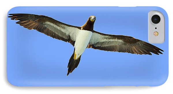 Brown Booby Phone Case by Tony Beck
