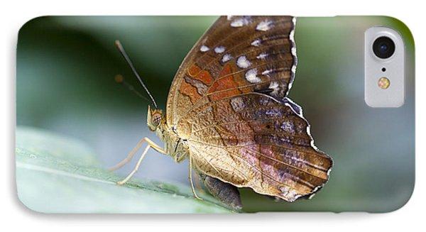 Brown Butterfly IPhone Case by Kjirsten Collier