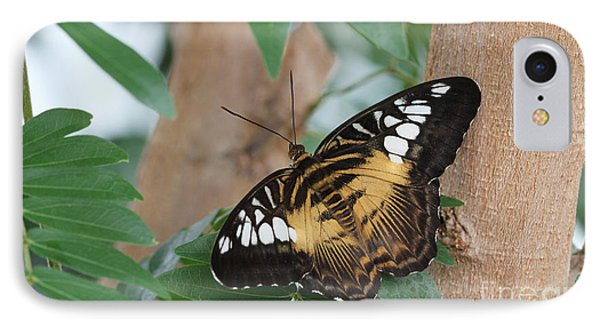 IPhone Case featuring the photograph Brown Clipper Butterfly #5 by Judy Whitton