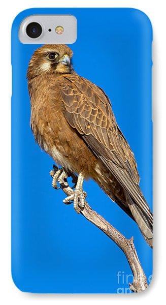 Brown Falcon Phone Case by Bill  Robinson