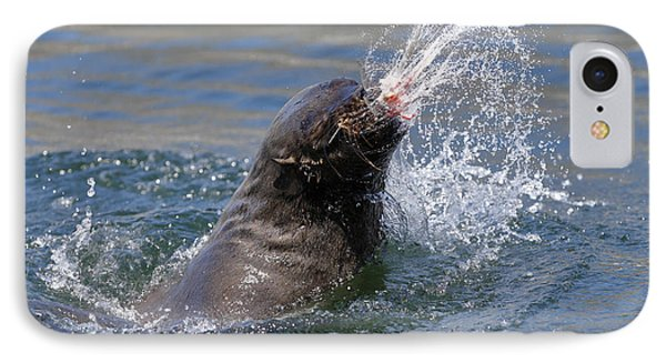 Brown Fur Seal Throwing A Fish Head IPhone Case