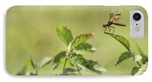 Brown Hawker Dragonfly Phone Case by Jason Politte
