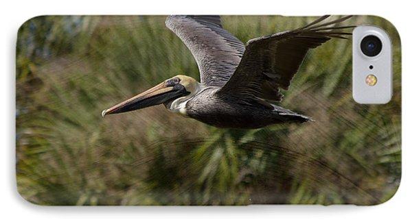 Brown Pelican - In Flight IPhone Case by Kim Hojnacki