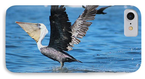 Brown Pelican Landing IPhone Case
