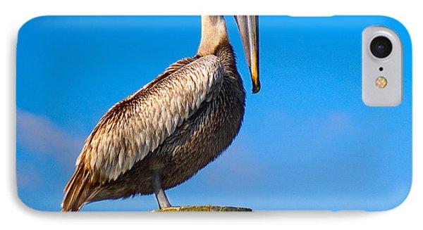 IPhone Case featuring the photograph Brown Pelican - Pelecanus Occidentalis by Carsten Reisinger