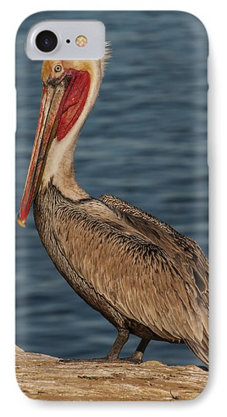 IPhone Case featuring the photograph Brown Pelican Portrait 2 by Lee Kirchhevel