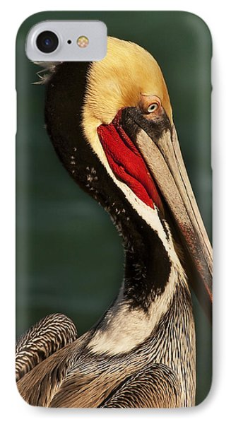 Brown Pelican Portrait IPhone Case by Lee Kirchhevel