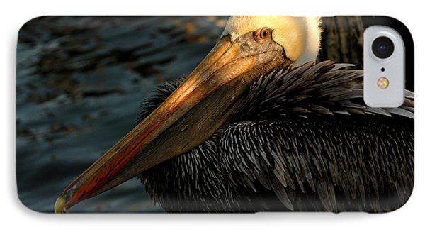 IPhone Case featuring the photograph Brown Pelican Resting by Susan D Moody