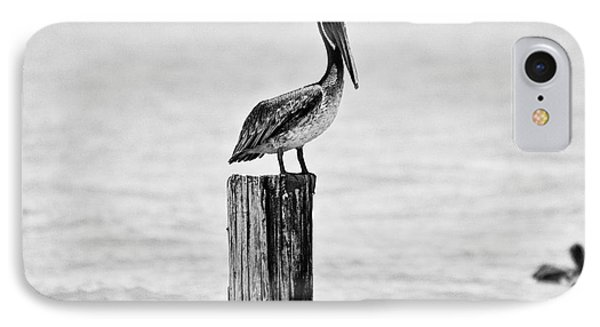 Brown Pelican Phone Case by Scott Pellegrin