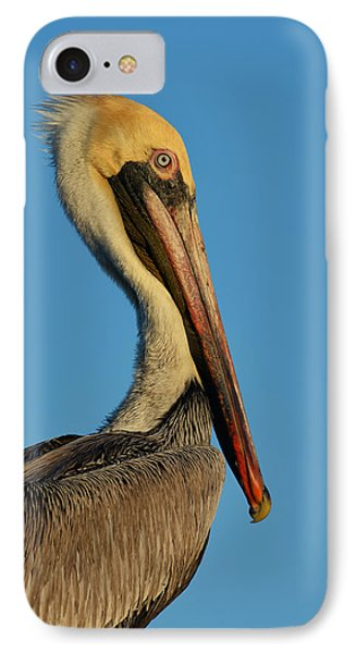 IPhone Case featuring the photograph Brown Pelican by Susan D Moody