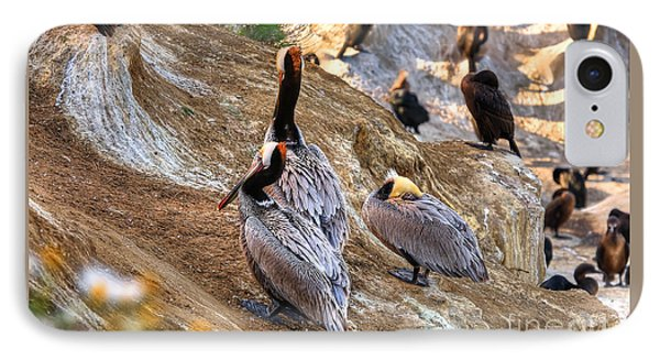 IPhone Case featuring the photograph Brown Pelicans At Rest by Jim Carrell