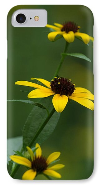 Browneyed Susan IPhone Case by Daniel Reed