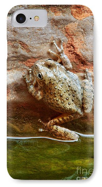 Buck Farm Frog IPhone Case by Inge Johnsson
