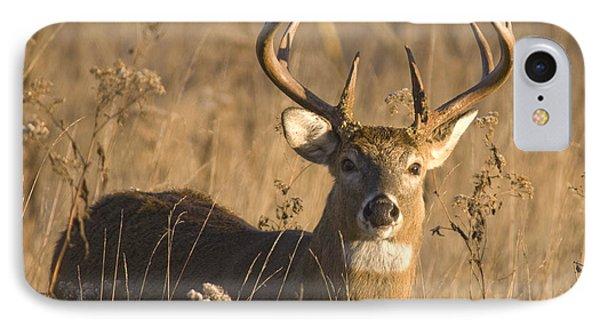 Buck In Field IPhone Case